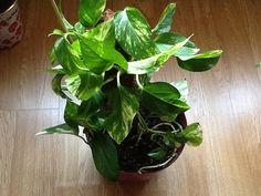 Uykusuzluğa İyi Gelen Çiçekler | Bitkilog Aloe, Planting Flowers, Spinach, Vegetables, Garden, Nature, Plants, Garten, Naturaleza