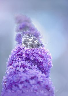 In the photograph purple heaven by Magda Wasiczek is 500px