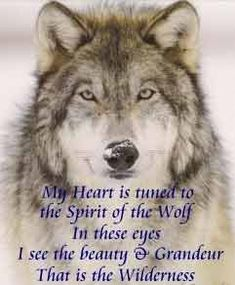 Be part of the pack, yet know who you are. Isn't that right Mr Wolf? I am mrs wolf and we love our pack amd Lone Wolf Quotes, Wolf Qoutes, Wolf Pack Quotes, Wolf Spirit Animal, Animal Spirit Guides, Beautiful Wolves, Animals Beautiful, Simply Beautiful, Danse Country
