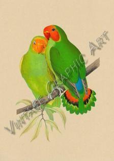 Bird Parrot West African Love-bird Red Shining Parakeet Clip | Etsy African Love, Vintage Birds, Parakeet, Image Shows, Love Birds, Printable Wall Art, Background Images, Parrot, Wall Art Prints