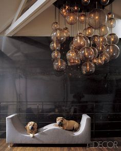 Dogs and Decor