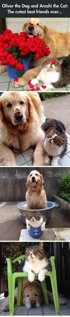 The Most Adorable Best Friends Ever #lol #friendship #cuteness #catanddog #pet