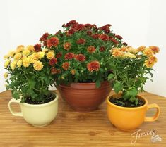 Fiesta® Fall Centerpieces: When it gets too cold for your mums to be outside, consider repotting in Fiesta! We used Jumbo Cups and the Small Baking Bowl to take these mums to the next level | alwaysfestive.com