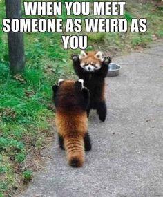 I love memes sometimes i laugh so hard i cant breathe :D Animal Humour, Cute Animal Memes, Funny Animal Quotes, Animal Jokes, Cute Memes, Crazy Funny Memes, Really Funny Memes, Cute Funny Animals, Funny Relatable Memes