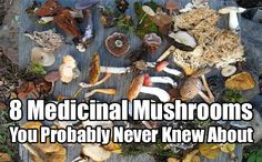 8 Medicinal Mushrooms. Mushrooms have been scientifically proved to having anti-bacterial and anti-viral properties which help the body get rid off diseases
