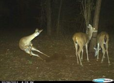 Deer freak out... accidentally posted this to my recipes board at first LOL