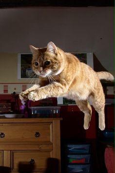 Jump  (via shocker51)