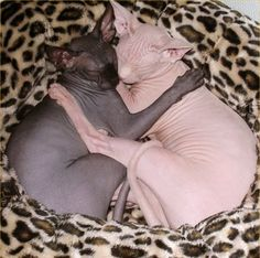 Naked cats!