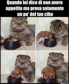 Gf is a hungry monster video humour, funny comics, funny posts, funny as Funny Animal Memes, Funny Cat Videos, Cute Funny Animals, Funny Animal Pictures, Funny Cute, Funny Posts, Funny Images, Cute Cats, Hilarious Pictures