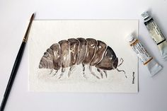 Roly Poly Pill Bug Original Watercolors Painting by sandraculliton, $35.00
