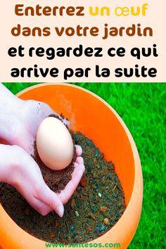 Enterrez un œuf dans votre jardin et regardez ce qui arrive par la suite#oeuf #jardin #plante #sol #jardinage