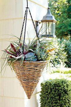 Hanging Container Garden Ideas: Succulent Hanging Container