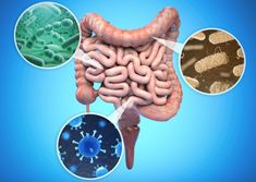 Two new studies are offering insights into diet, gut bacteria, and health. One finds a Mediterranean diet can reconfigure gut bacteria to promote healthy aging, while another finds gut bacteria producing a metabolite that increases heart disease risk. Als Symptoms, Cohort Study, Flora Intestinal, Gut Microbiome, Dieta Paleo, Gut Bacteria, Healthy Aging, Leaky Gut, Diets