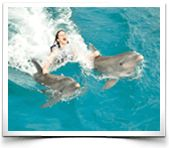 Dolphin Royal Swim http://www.dolphindiscovery.com/cancun-islamujeres/cancun-activities-dolphin-royal-swim.asp