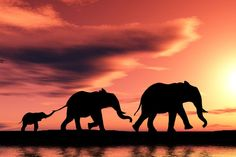 SETTING A NEW GOLD STANDARD / Elephants at sunset...Kenya /  #ExpediaWanderlust