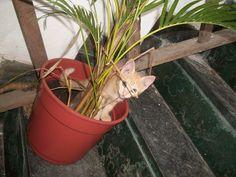 Pipico acabando com a minha palmeira - com dois meses de vida
