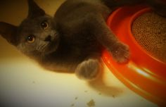 Nick at https://www.facebook.com/Independent-Cat-Society-Playpens-Page-432225636826080/?ref=aymt_homepage_panel