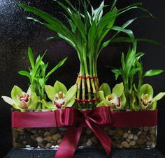 lucky bamboo with orchids