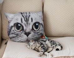 100% Original Cat Head Style Pillow  - American Shorthair-  Very Cute NEW op Etsy, 38,68 €
