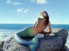 Thanks to Animal Planet, the mermaid debate is raging again! Check out this link for a discussion on whether they could possibly exist or not! #mermaids #sirens #ocean #cryptozoology