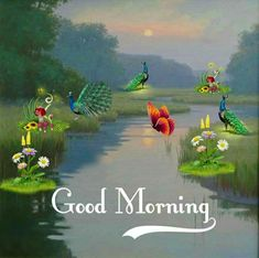 Good Morning Flowers Gif, Good Morning Images, Good Morning Quotes, Beautiful Photos Of Nature, Morning Greeting, Peacock, Painting, Buen Dia, Messages