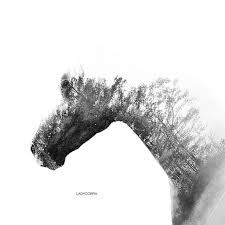 horse double exposure - Google Search