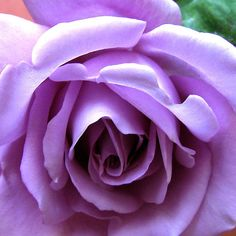 ~~The Heart of a Blue Moon Rose by Kathryn Jones~~