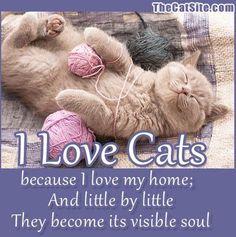 A Cat makes a house a home.