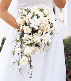 A cascade style bouquet with white gardenias, roses, spray roses and stephanotis, green ivy, variegated pittosporum and plumosus