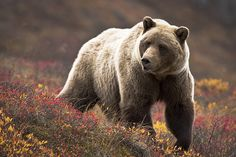 ursos - Pesquisa Google