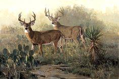 Wildlife Paintings, Wildlife Art, Deer Art, Moose Art, Whitetail Deer Hunting, Deer Drawing, Big Deer, Cowboy Art, Art Google