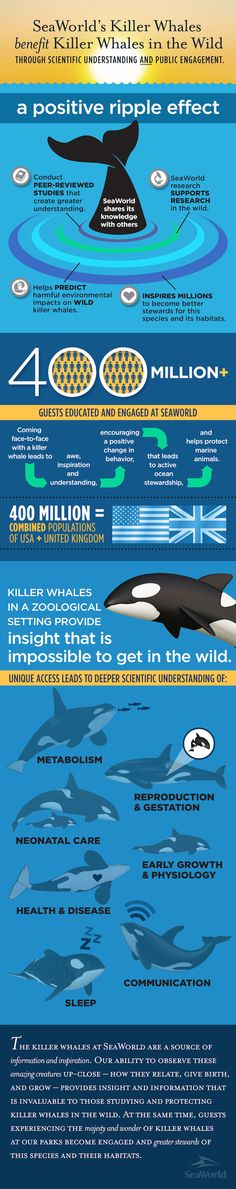 Research Helps Wild Killer Whales Infographic Great Whale, Seaworld Orlando, Political Quotes, Killer Whales, My Spirit Animal, Sea World, Animals Of The World, Worlds Of Fun, Sea Creatures