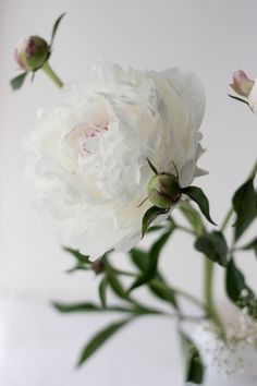 Grew up with Peonies in the yard.  I'll never forget proudly telling my Mother that I had helped her out by picking all the ants off the Peonies one year... and having dozens of them on my clothing and shoes. On the couch.  ~~  Houston Foodlovers Book Club