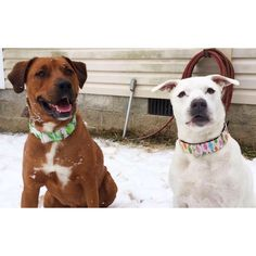 """Meredith Spence: """"The pups love their new collars & so do I :) Arrived just as described, both fit perfectly. Would definitely order again!"""""""