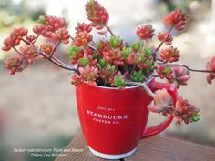 Thirty Cold-Hardy Succulents for Northern Climates