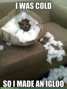 animal humor with captions | Animal captions...