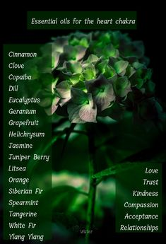 Essential Oils for Each Chakra - Reiki healing - Lebensraum Reiki, Daily Meditation, Chakra Meditation, Meditation Crystals, Natural Living, Au Natural, Anahata Chakra, Sacral Chakra, Throat Chakra