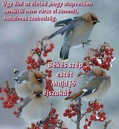 Album, Bird, Animals, Animales, Animaux, Birds, Animal, Animais, Card Book