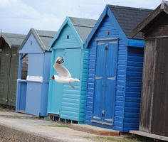 Beach Huts And Seagull.. Brightlingsea.. Taken by Debra Betts
