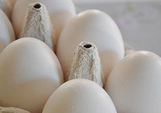 Stempel von Eiern mit Backsoda aif Schwamm entfernen.
