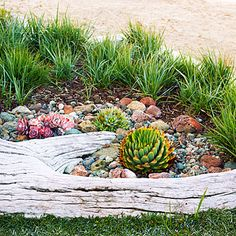 Driftwood planting beds for succulents and grasses