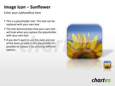 Bring life to your presentation by using our Sunflower Image Icon for PowerPoint. Download now at http://www.charteo.com/en/PowerPoint/Backgrounds-Images/Photo-Icons/Image-Icon-Sunflower-PowerPoint.html