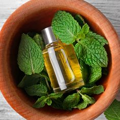 11 Benefits of Melissa Essential Oil