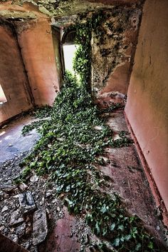 Abandoned house overgrown with vines. by Lorin Old Buildings, Abandoned Buildings, Abandoned Places, Haunted Places, Wabi Sabi, Cottage, Old Houses, Mother Nature, Around The Worlds