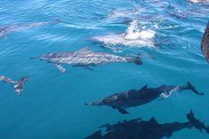 Delfine und Insel Benitiers Tagestour