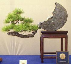 Japanese succulent                                                       …
