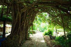 鹿児島の奄美大島・徳之島、沖縄県のやんばる・西表島を含む「奄美・琉球」の世界自然遺産登録を見据え、各エリアの個性をナビゲートします。美しい海や豊かな森といった自然はもちろん、各種体験や食文化など多彩な情報をお届けします。