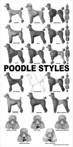 Here is a poster of all the common poodle styles. Obviously there is much more you can do with a poodle like creative grooming and Asian fusion but these are classic trims known for decades some ev… Dog Training Methods, Basic Dog Training, Dog Training Techniques, Training Dogs, Dog Grooming Styles, Poodle Grooming, Grooming Salon, Pet Grooming, Poodle Haircut