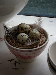 nest in bowl