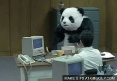 Panda Design Animals Giff #9501 - Funny Panda Giffs| Funny Giffs| Panda Giffs